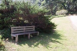 Bench under a bush