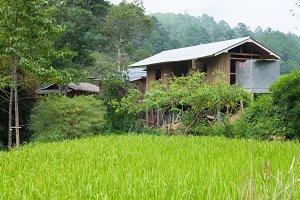 Home adjacent rice fields