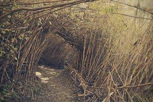 way between the cane