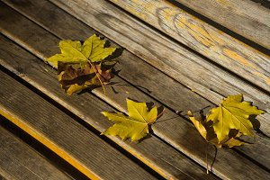 Autumnal concept