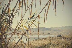 lake behind the reeds
