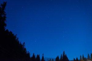 Forest under blue dark night sky