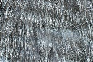 Fur texture - background