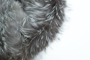 Fur on the white background