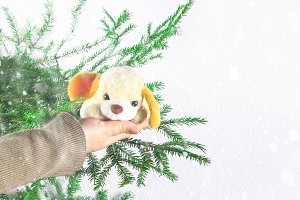 The symbol of the year is a toy dog in the hands of a girl against the background of fir branches. New Year Christmas.