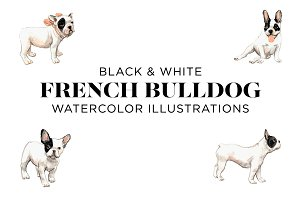Black and White French Bulldogs