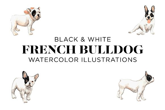Black and White French Bull-Graphicriver中文最全的素材分享平台