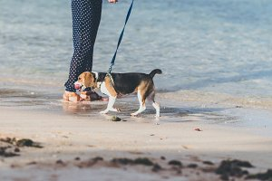 Young woman with her lovely beagle dog on the beach of Bali island, Indonesia.