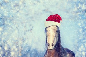 Christmas horse with Santa hat