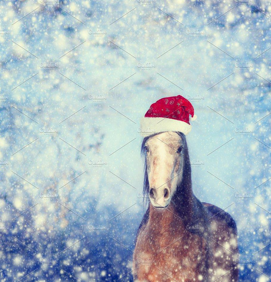 christmas horse with santa hat holidays - Christmas Horse