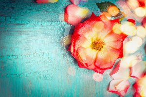 Lovely red flower on turquoise