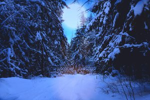 winter night forest in snow landscape