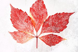 red leaf on a snowy background