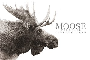 Moose Wildlife Illustration