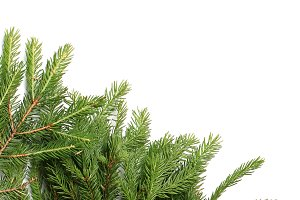 fir tree branches isolated on white background christmas background