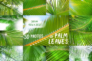 30 tropical photos - palm leaves