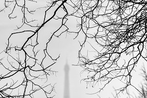 Tree branches and Eiffel Tower