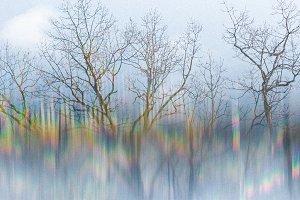 Winter Woods Lines of Refraction