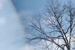 Winter Woods Sunny Rainbow