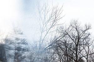 Winter Woods_4