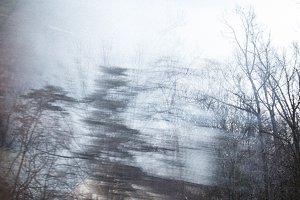 Winter Woods Dormant Trees