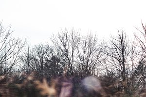 Winter Woods and Abstract Leaves