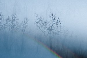 Winter Woods with Rainbow