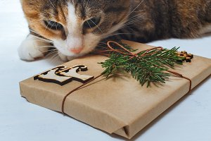 Cat with curiosity looks at a Christmas present