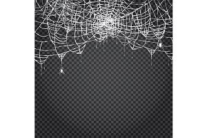 Spider and Web Isolated