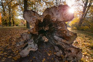 Autumn trunk