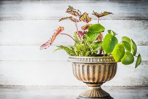 Patio urn planter with plants