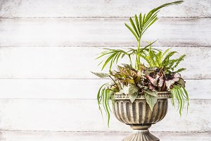 Urn planter with green plants
