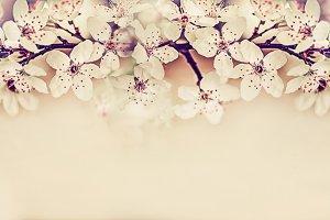 Springtime cherry blossom border