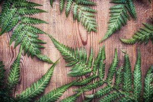 Fern leaves on rustic wooden, layout