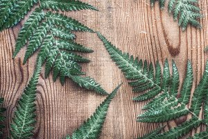 Fern leaves on wooden, layout
