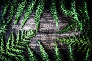 Fern leaves on dark background