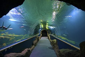 corridor inside an aquarium