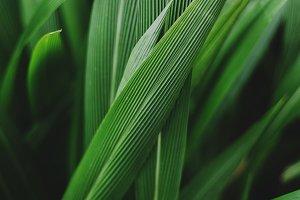 Lush Green Wild Grass
