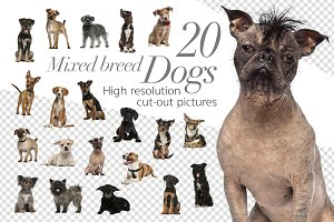20 Mixed breed Dogs - Cut-out Pics