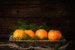 Fresh Clementines or Tangerines and Xmas Tree Branches