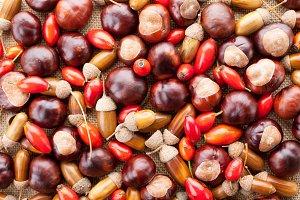 assorted acorns