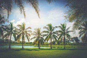 summer coconut palm tree park