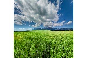 Fresh Green Wheat Field Under Scenic Dramatic Sky