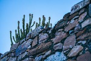 Cactus Vibes