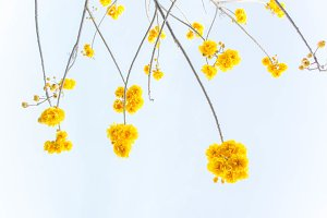 yellow flowers on summer sky