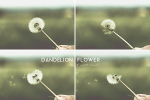 Dandelion Flower / 4 Photo Bundle
