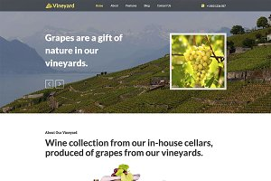 Hot Vineyard