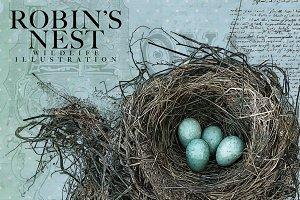 Robin's Nest Vector Illustration