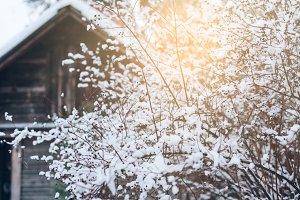 Natural winter scene