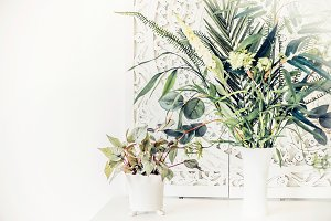 Pretty indoor plants on white table